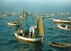 The fleet of small fishing boats in the Lofoten, 1947. Into the 1950s Norwegian fisheries were dominated by small and medium-sized boats, owned by the fishermen themselves. Photo: Lundqvist. The Lofoten Museum.